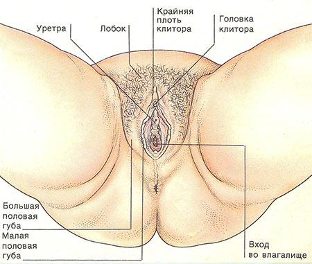 Гей порно фото спермы — Nau-Tech