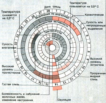 Как считать цикл менструальный прочитать