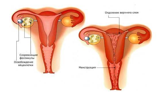 Почему болит правый яичник при месячных